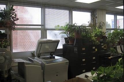 Network MFP Scanning Breaks Due to Office Plants