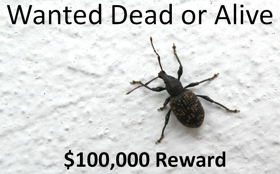 Wanted $100000 Reward