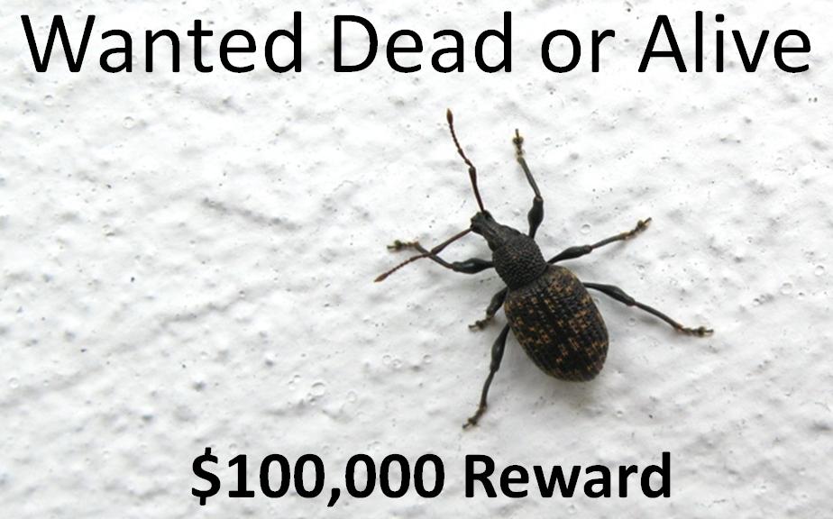 Wanted $100000 Reward